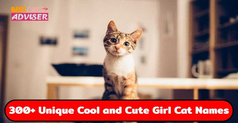 300+ Unique Cool and Cute Girl Cat Names