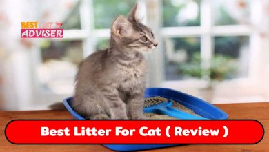 Best Litter For Cat