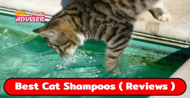 The 5 Best Cat Shampoos for your Cat