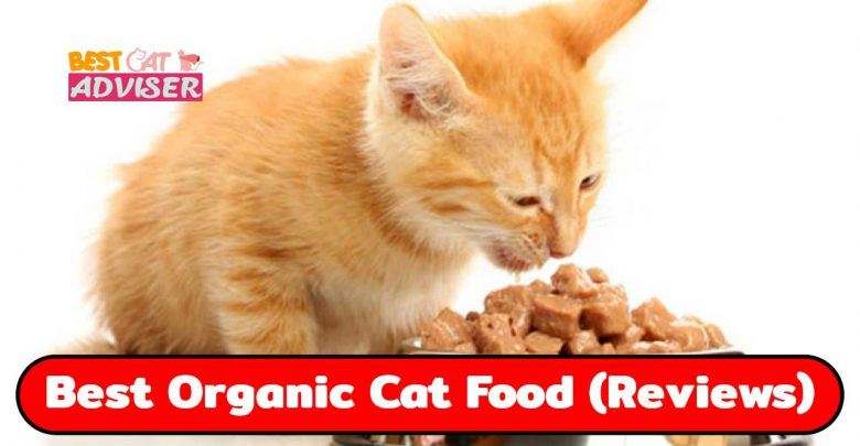 Best Organic Cat Food
