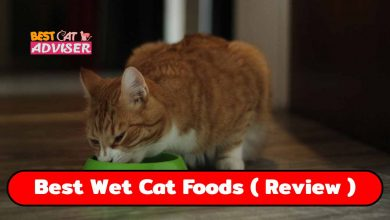 Best Wet Cat Foods