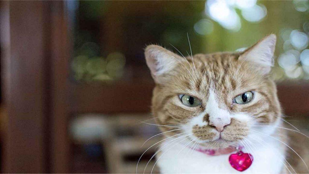 Funny Female Cat Names