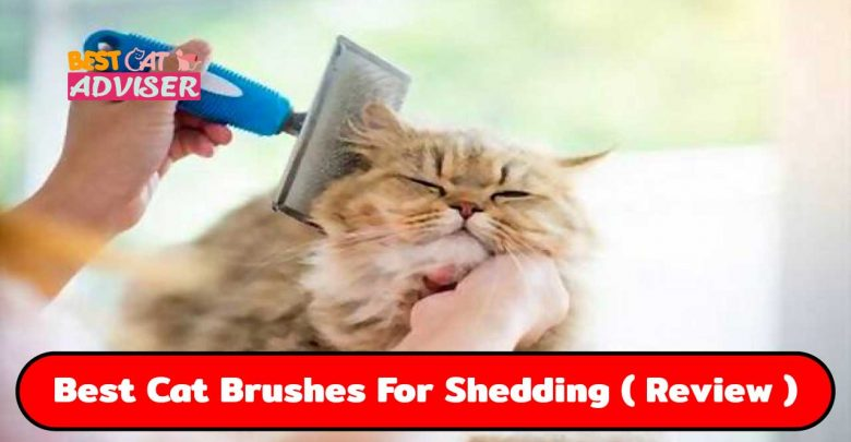 Best Cat Brushes For Shedding