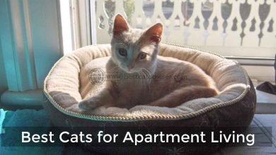 Best Cats for Apartment Living
