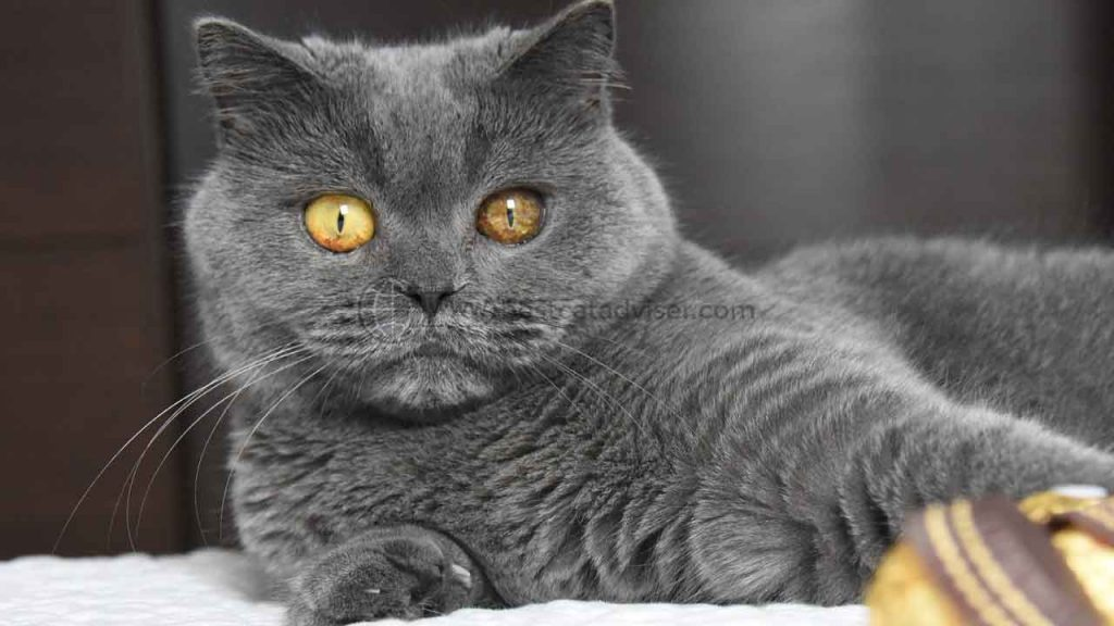 Top 10 Best Cats for Apartment Living 1
