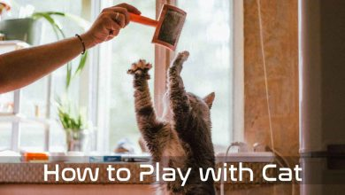 How to Play with Cat