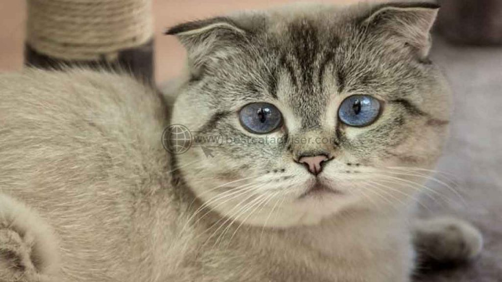 Top 10 Best Cats for Apartment Living 4