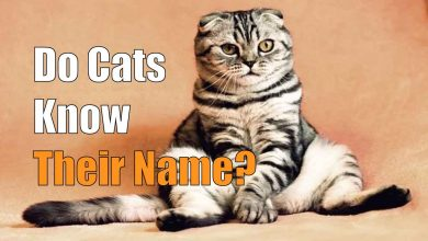 Do Cats Know Their Name