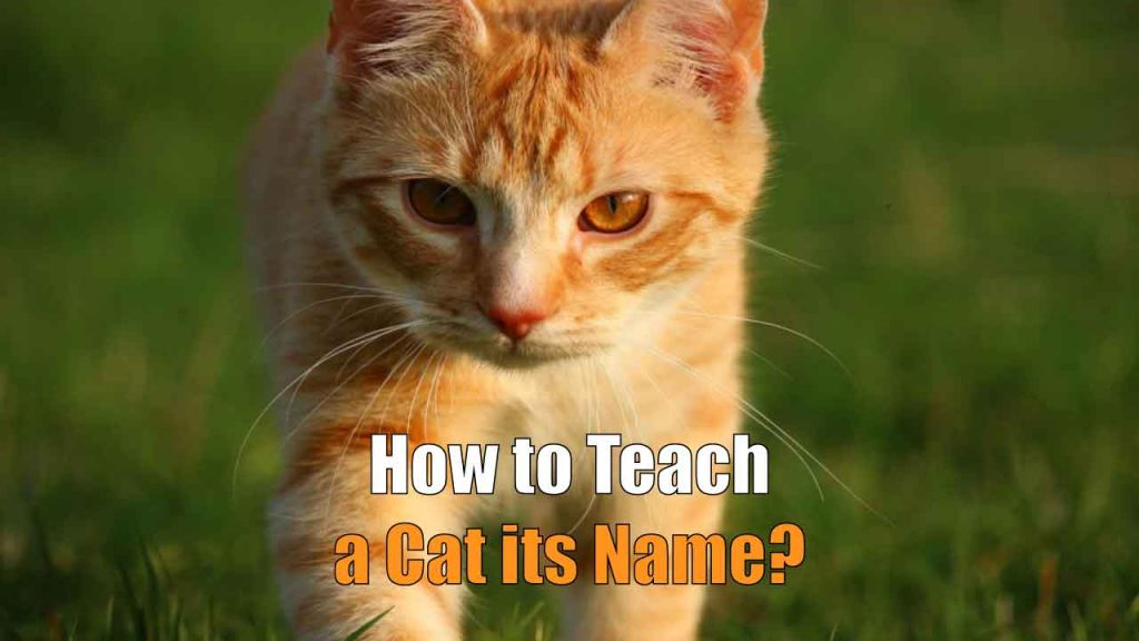 How to Teach a Cat its Name